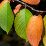 Farbige Blätter