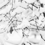 Einzelnes Blatt an verschneitem Zweig